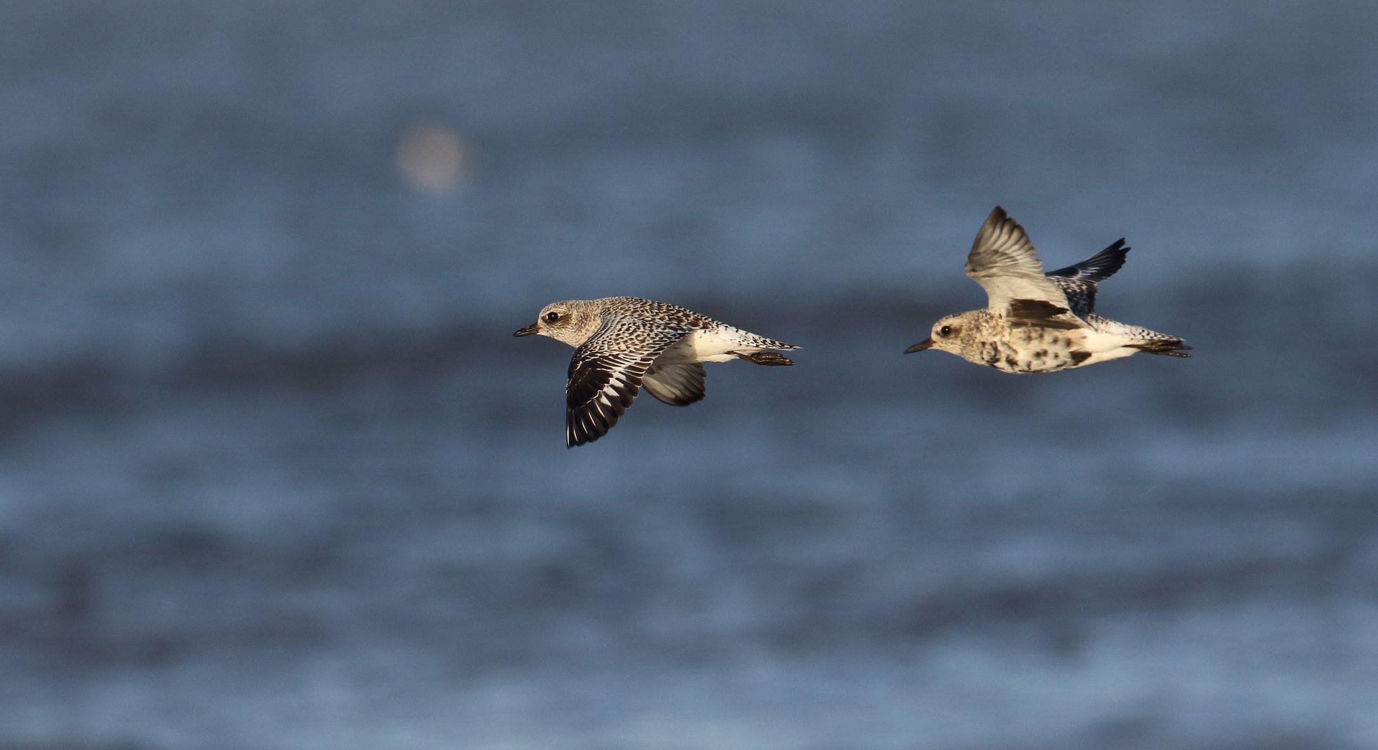 Create Blog _ BTO - British Trust for Ornithology.html