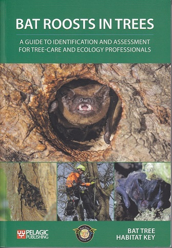 Bat roosts in trees cover