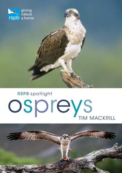 Ospreys (cover)