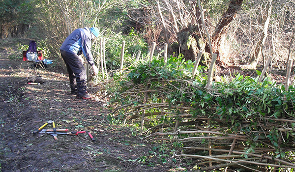 BTO Reserve - Hedge-laying