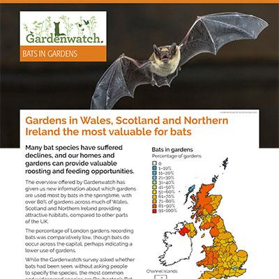 Gardenwatch - bats guide cover