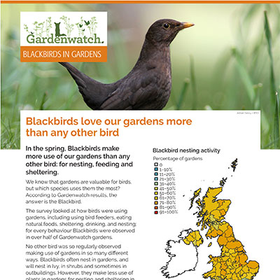 Gardenwatch - Blackbird guide cover