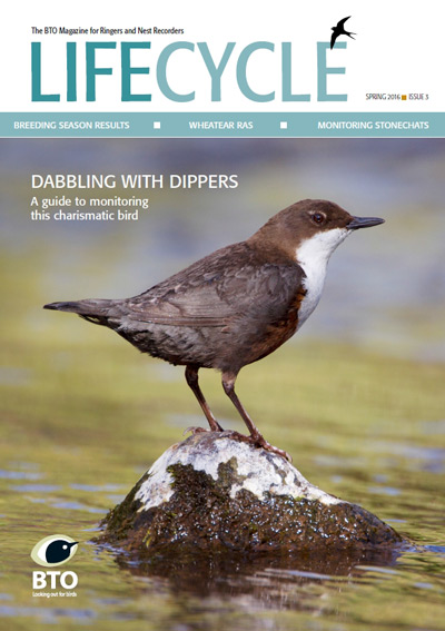 LifeCycle spring 2016 cover