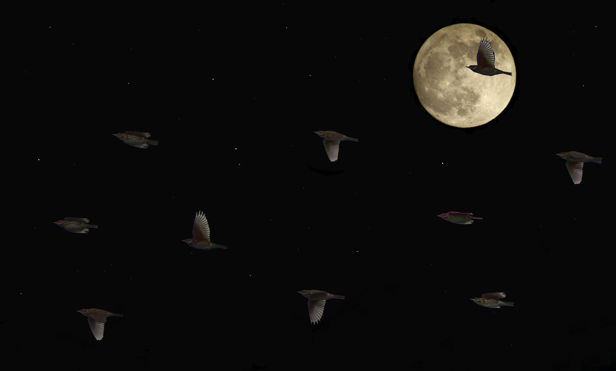 Redwings. Jonathan Heath