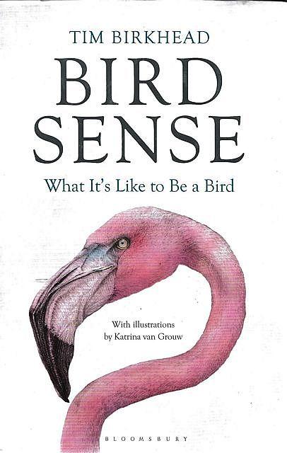 Bird Sense: what it's like to be a bird book