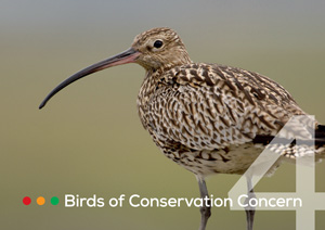 Birds of Conservation Concern 4 leaflet
