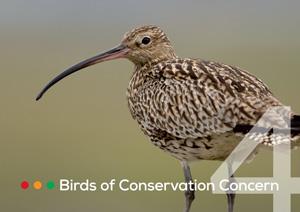 Birds of Conservation Concern 4 leaflet