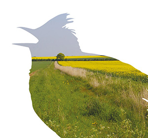 Learn more about the Farmland Birds Appeal