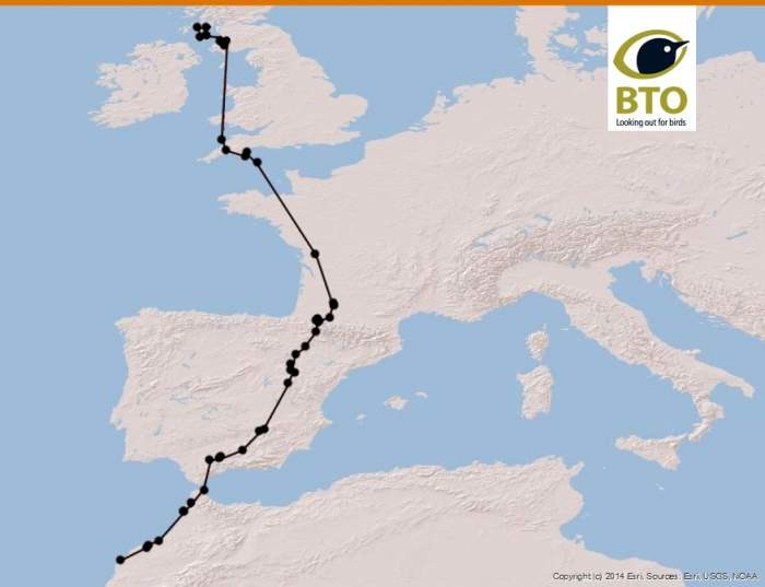 Short-eared Owl tracking route gv54153 Arran to Morocco