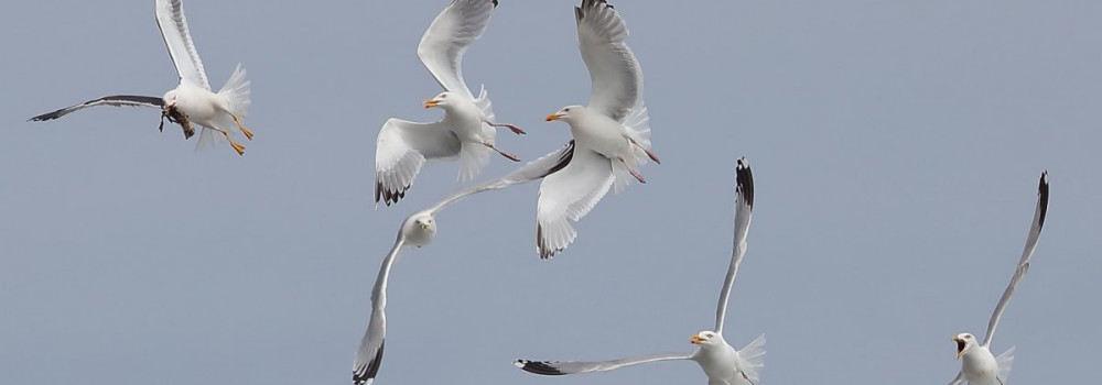 Gulls, photograph by David Williams