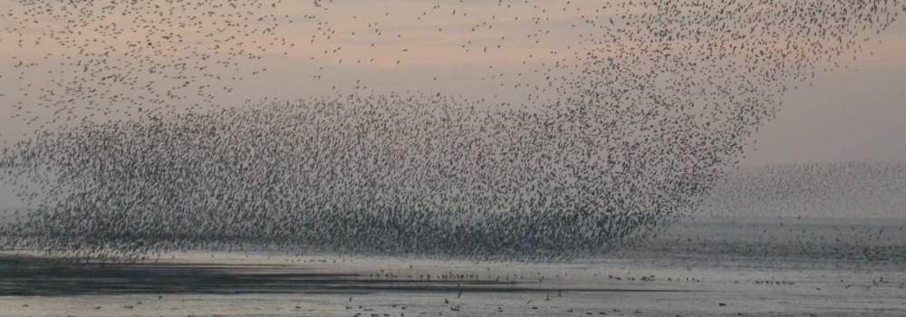 Knot flock by Dawn Balmer