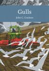 Gulls (cover)