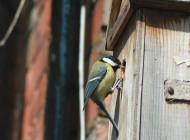 Great Tit with nest box. David Waistell