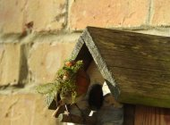 Nesting Robin, by Trevor Daniels