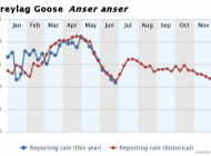 Greylag Goose reporting rate