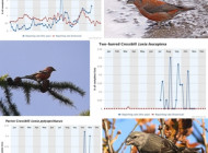 Common Crossbill by Margaret Holland, Parrot Crossbill by Rabs Pics