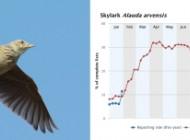 Skylark by Will Bown