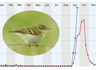 Reporting rate of Yellow-browed Warbler (Blue = Current Trend, Red = Historic)