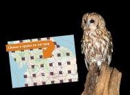 Tawny Owl by John Harding
