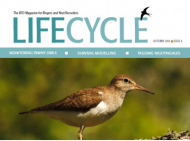 Life Cycle Issue 4