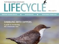 Life Cycle Spring 2016
