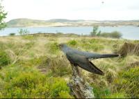 Cuckoo. Alan McFadyen