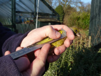 Greenfinch in the hand having its wing measured, by Dawn Balmer