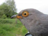 Cuckoo by Andrea Kelly