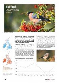 Bird Table Species Focus article