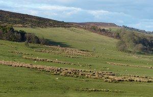 In-by field habitat. Photograph by Dawn Balmer