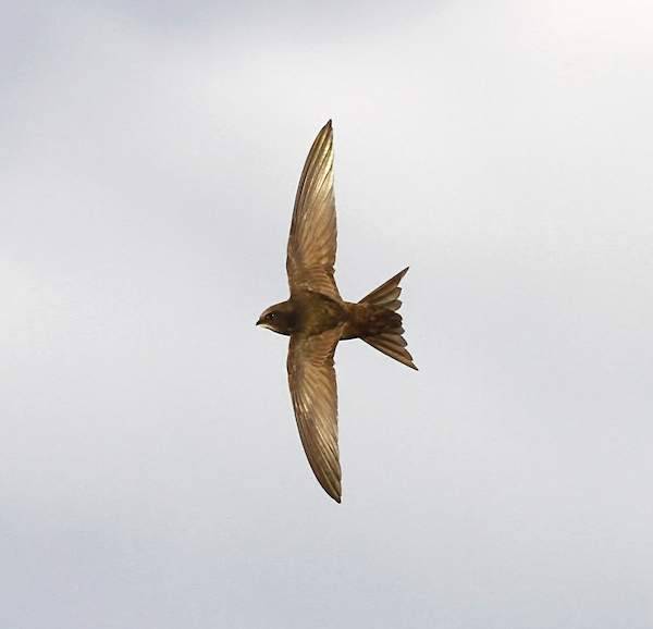 Swift by Dennis Atherton