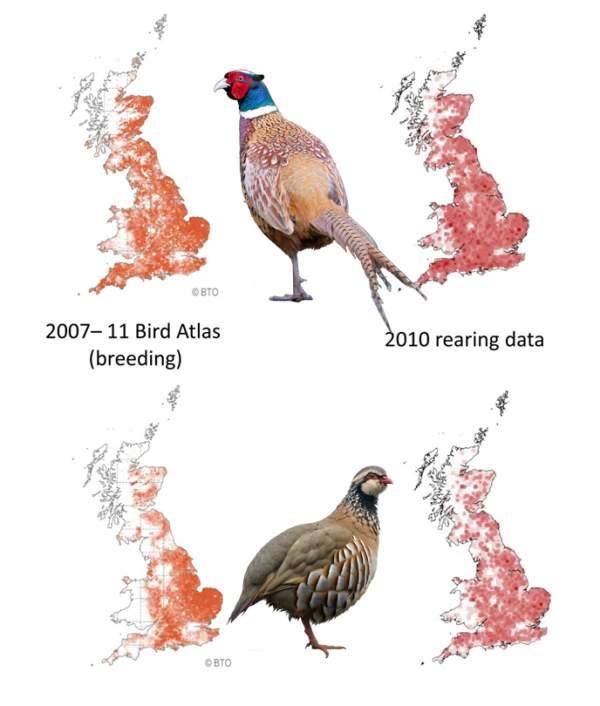 Bird Atlas 2007-11 wild and captive game bird comparison