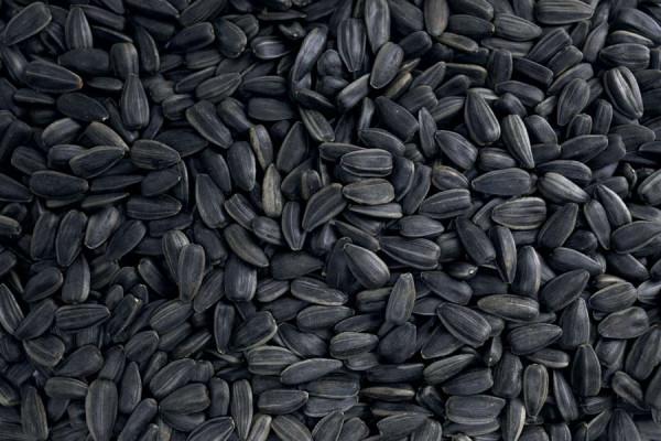 Black sunflower seed