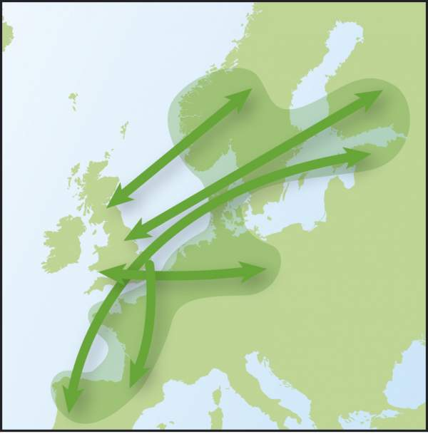 Blackbird (Time to Fly migration map)