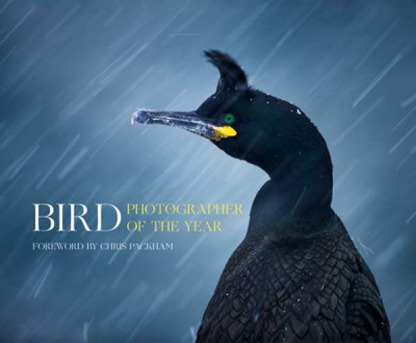 Bird Photographer of the Year 2016