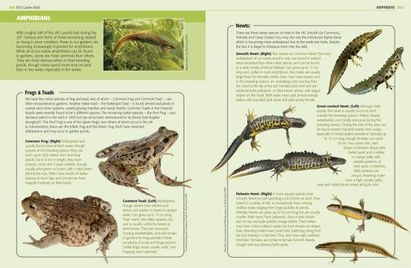 Garden Birds and other wildlife sample page 2