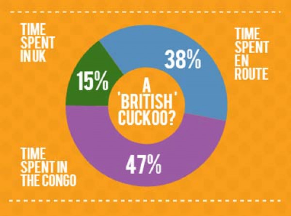 Chris the Cuckoo - Time spent in the UK infographic