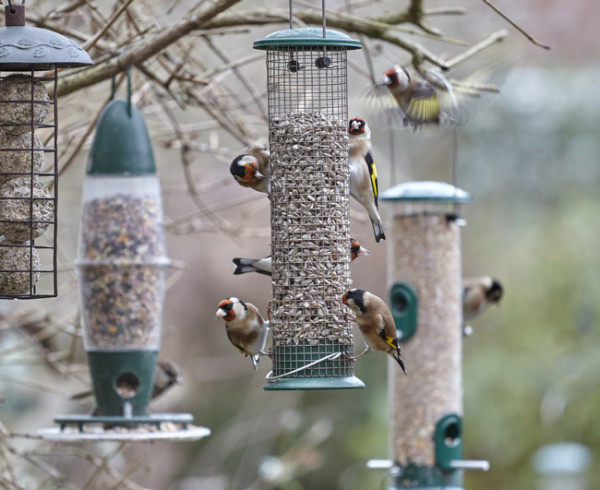 Goldfinches on Peckish all weather feeders. Image courtesy of Westland Horticulture