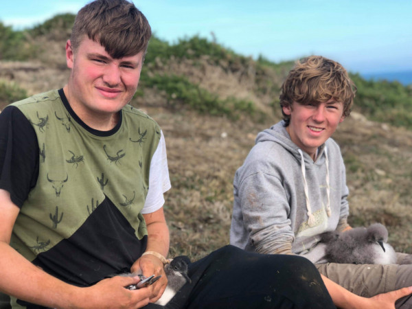 Harry King and Louis Driver ringing Manx Shearwater chick. Steve Stansfield
