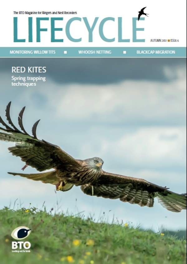 Cover image of LifeCycle Issue 6