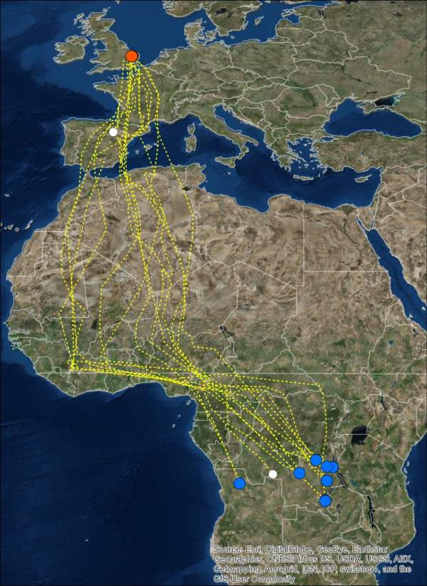 Nightjar GPS migration map