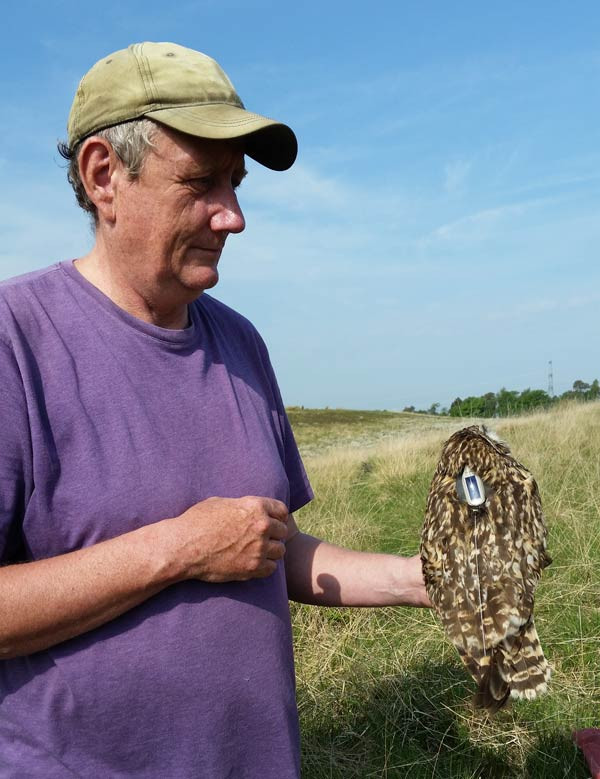 Short-eared Owl tagging. Ben Darvill
