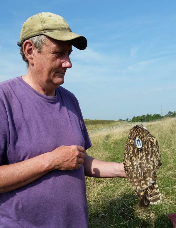 Short-eared Owl tagging. Ben Darvill