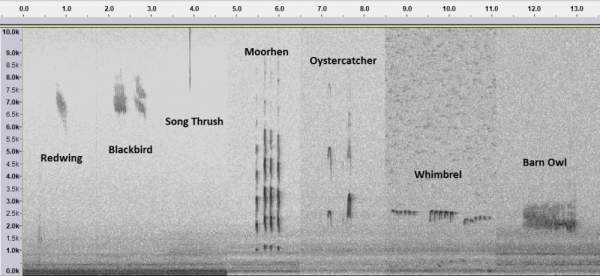 Sonograms. Jonathan Heath