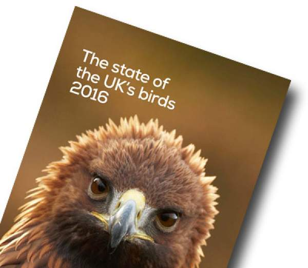 State of UK Birds 2016 cover