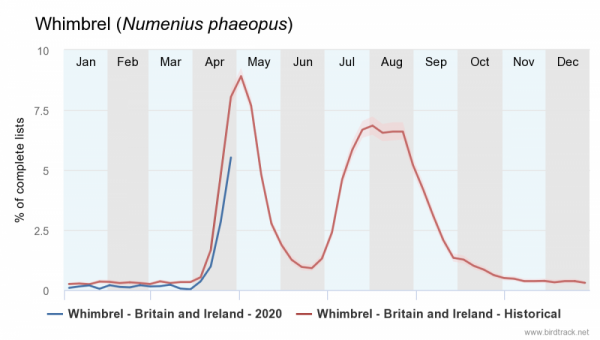 whimbrel-numenius-phaeop.png