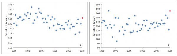 Graphs showing laying dates for Blackcap and Barn Owl.