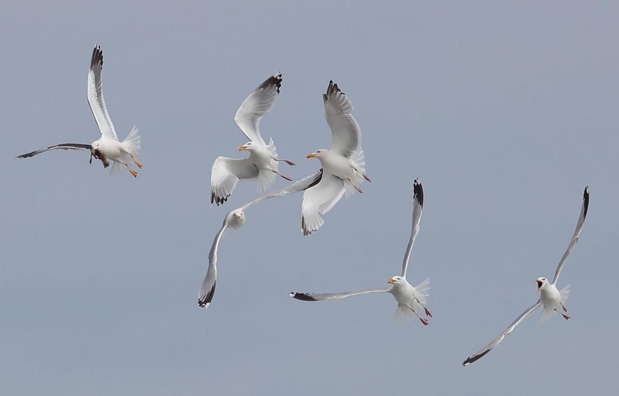 Gulls, photograph by David Williams