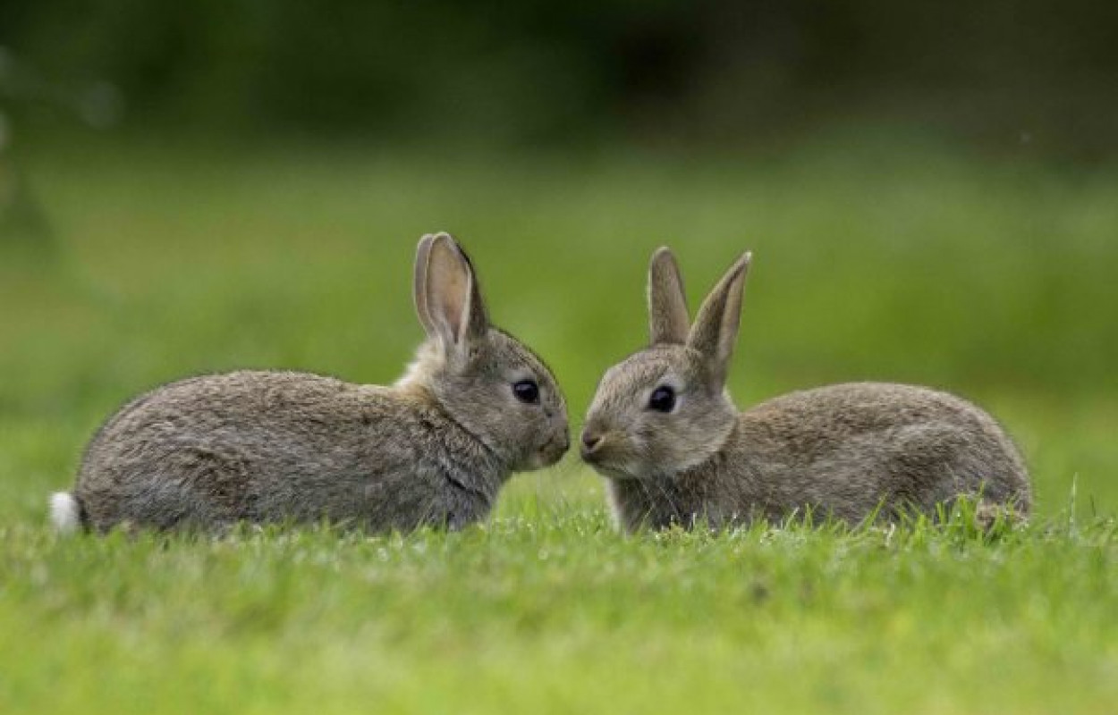 Rabbits, photograph by John Harding