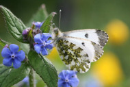 Orange Tip by Mike Toms